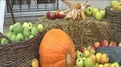 A Zevio, nel mondo della mela