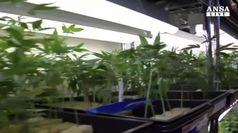 Roberti: contro clan legalizzare cannabis
