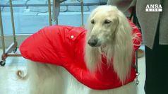 A Milano l'atelier per cani fashion