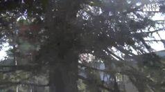 Ecco l'Atlante alberi monumentali