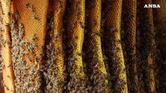 'Azzerata' produzione miele, colpa di siccita' e maltempo