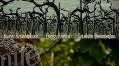 Cantina: La collina dei ciliegi - Daniele Massaro
